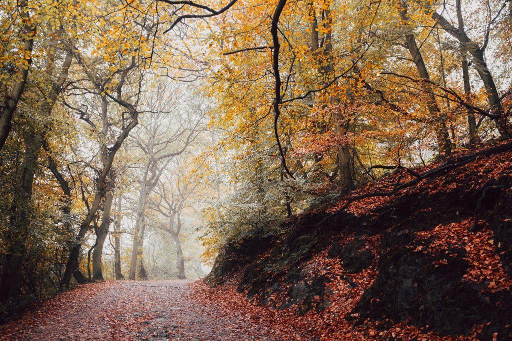 Hygge Autumn Bucket List