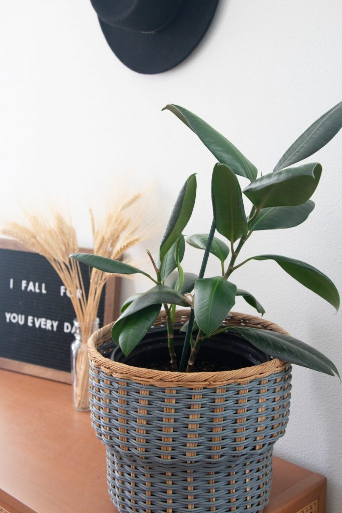 where to buy cute plant pots